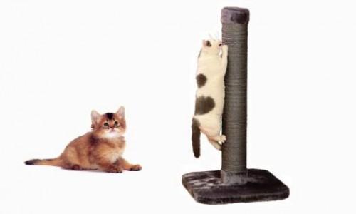 """<h2><a href=""""https://geek.hr/e-kako/dom/kako-napraviti-grebalicu-za-vaseg-macica/"""">Kako napraviti grebalicu za vašeg mačića?<a href='https://geek.hr/e-kako/dom/kako-napraviti-grebalicu-za-vaseg-macica/#comments' class='comments-small'>(0)</a></a></h2>Mačke imaju urođenu potrebu za grebanjem stvari. Kako bi zaštitili svoje pokućstvo i uštedjeli nešto novca izradite svojoj mački njenu vlastitu grebalicu. Zavirite u podrum ili špajzu i pokušajte naći"""