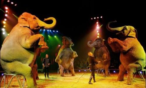 Kako je nastao cirkus?