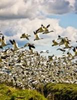 Kako ptice lete?