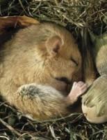 Kako životinje prežive zimski san?