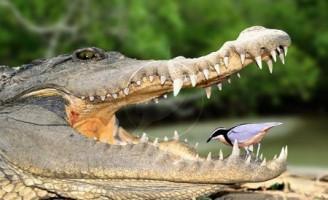 Kako izgleda suživot dva različita organizma?