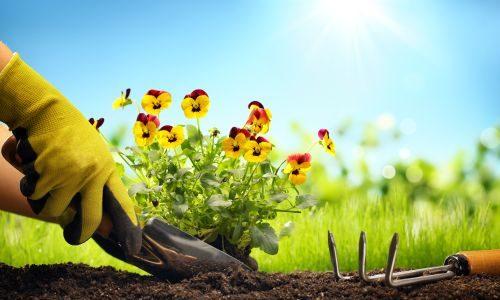 Kako posaditi cvijeće u proljeće ?