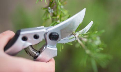 Kako izabrati vrtni rezni alat ?