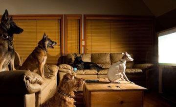 Evo što psi vide kada gledaju televiziju