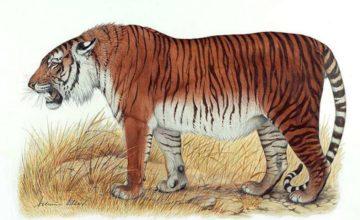 Znanstvenici planiraju izumrlog kaspijskog tigra vratiti iz mrtvih