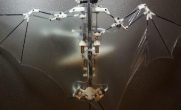 Bat Bot je robot inspiriran šišmišima