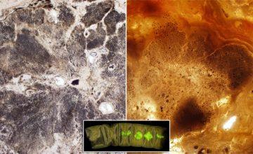 Fosili stari 1.6 milijardi godina mogli bi biti najstarije biljke