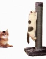 Kako napraviti grebalicu za vašeg mačića?