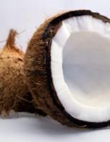 Kako raste kokos?