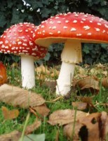 Kako se gljive razmnožavaju?