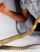 Kako reagirati kod ugriza zmije?