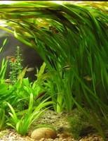 Kako transportirati biljke za akvarij?