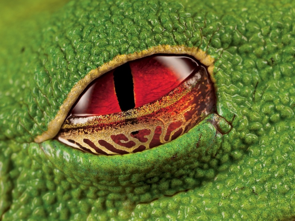 Žablje oko