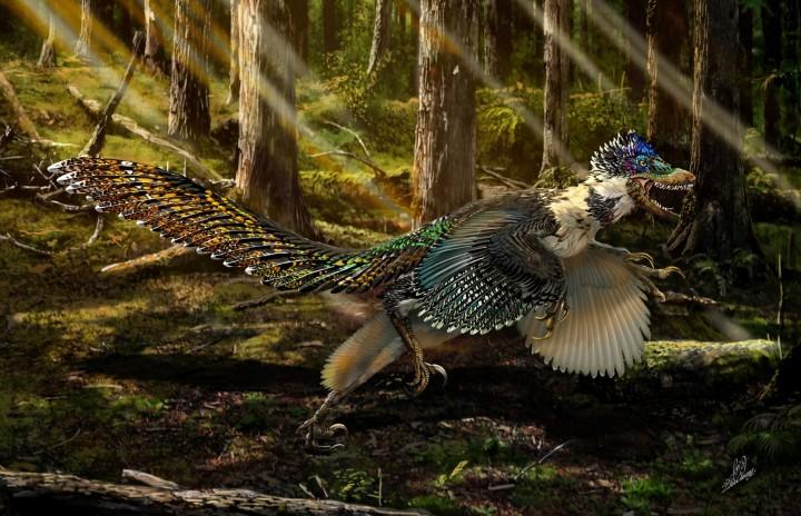 dinosaur perje