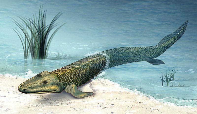 oci a ne noge su izvele ribe iz mora na kopno