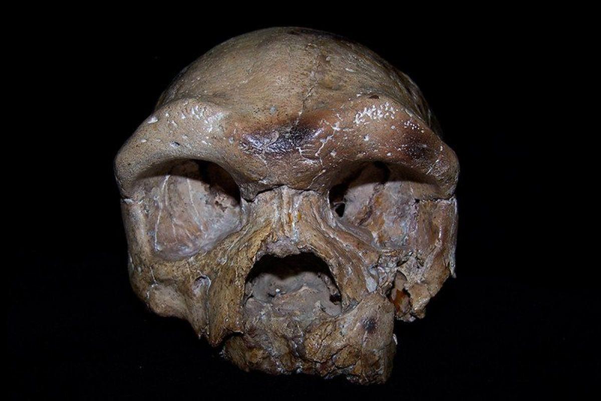 drevna lubanja iz kine mogla bi ispisati novu povijest ljudske vrste