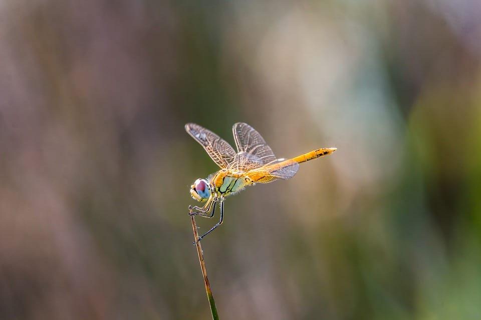 broj letecih insekata se smanjio za cak 75 posto