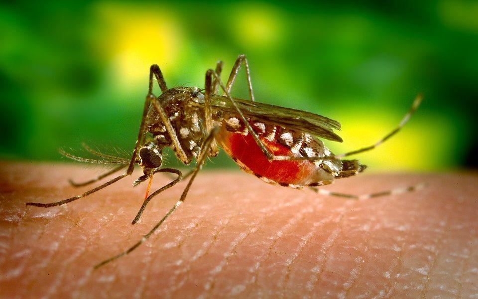 """""""Kontrola rađanja"""" komaraca za smanjenje malarije"""